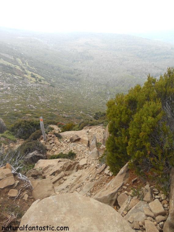 Mt Ossa Trail